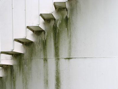 Algae-Inducoat-Trap